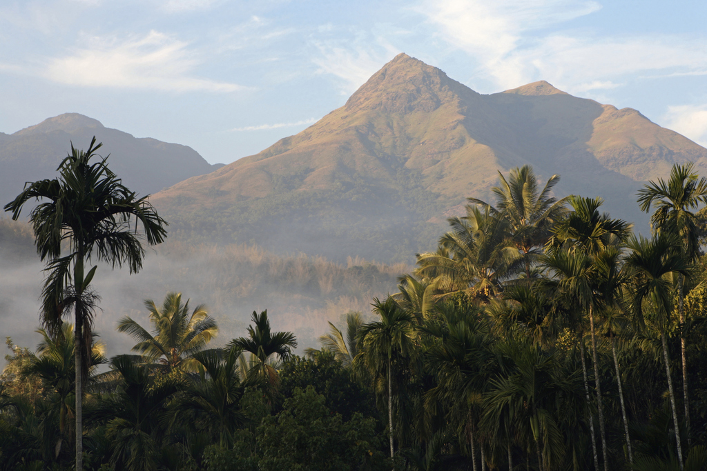 India, Kerala, Wayanad, Chembra Peak, view of mountain and palm trees in the foreground