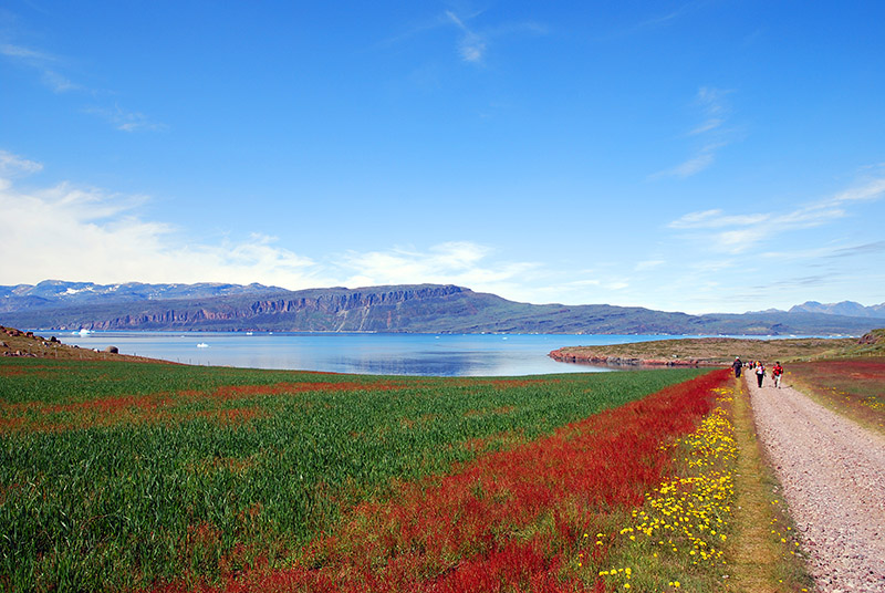 Maravilloso paisaje florido de Igaliku. Groenlandia