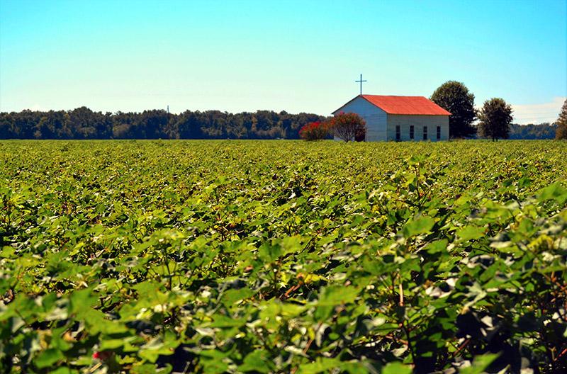 Ruta 61: Los campos de algodón salpican el paisaje del estado de Luisiana