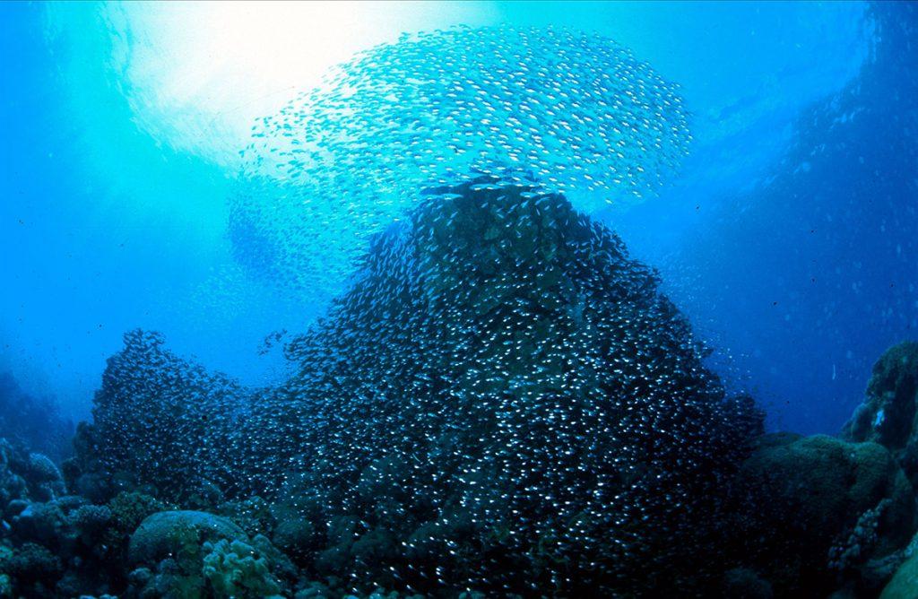 Egipto, banco de peces