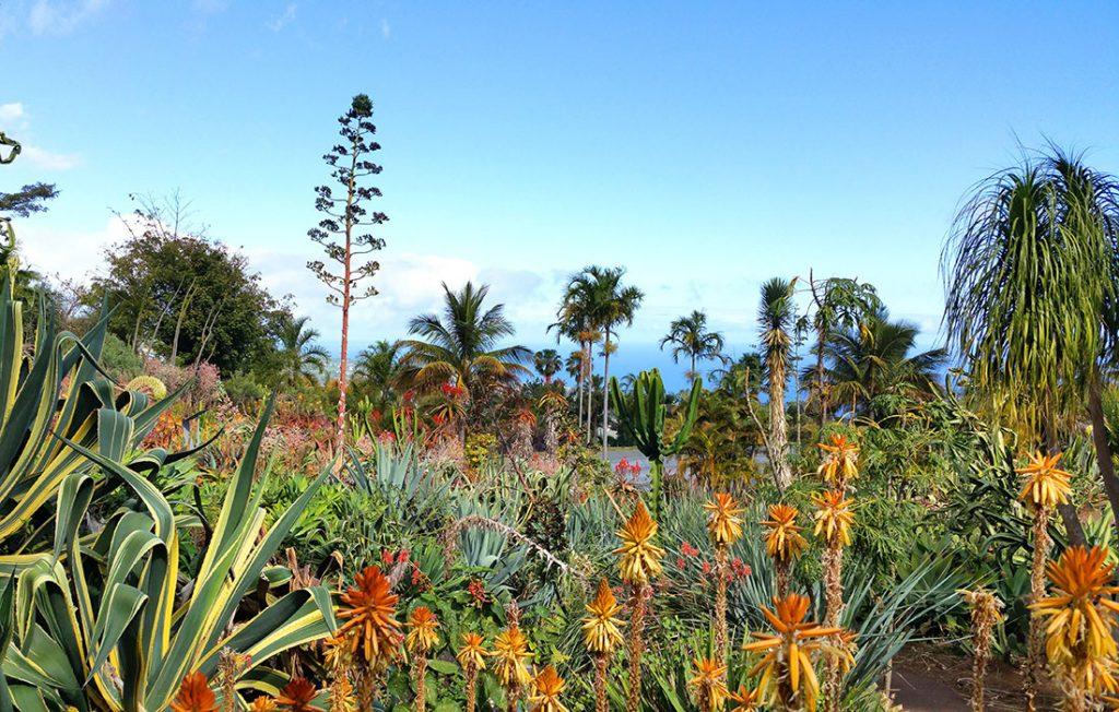 Viajar a Isla Reunión - Jardin Botanico de Mascarin
