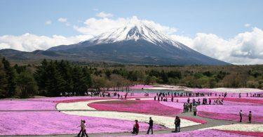 Festival flores Japon