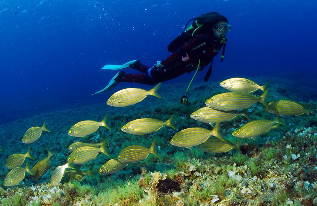 Submarisnimo en Formentera