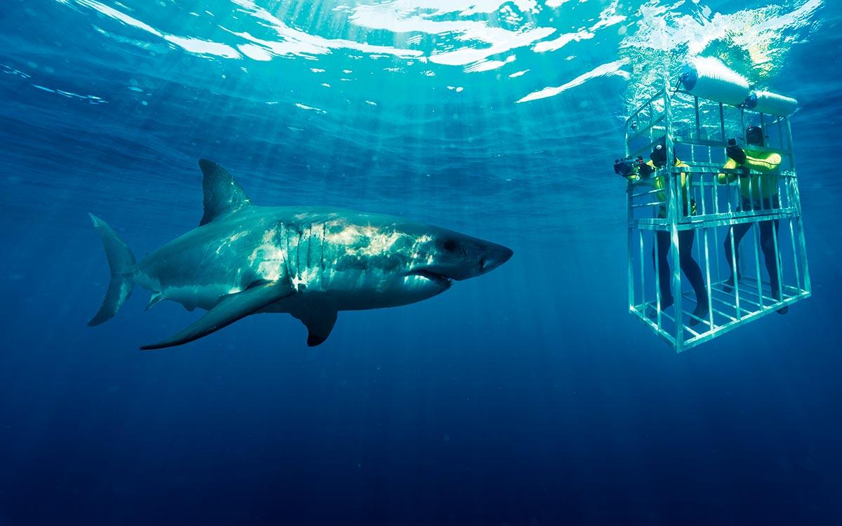 Sudáfrica, Tiburon Blanco
