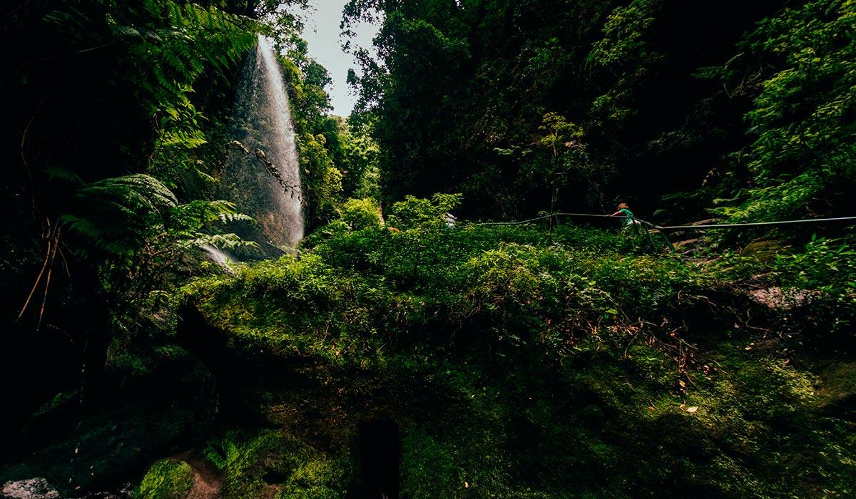 La Palma. Bosque de los Tilos