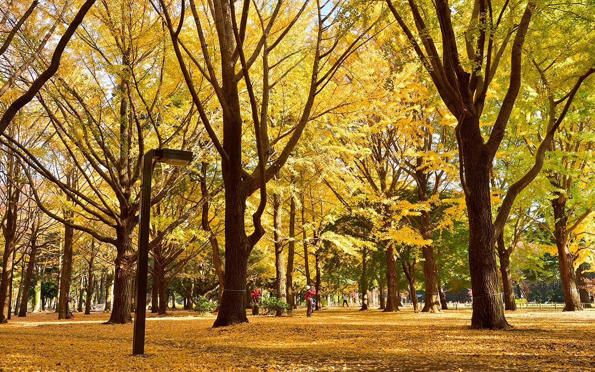Tokio en otoño. Parque-de-Yoyogi
