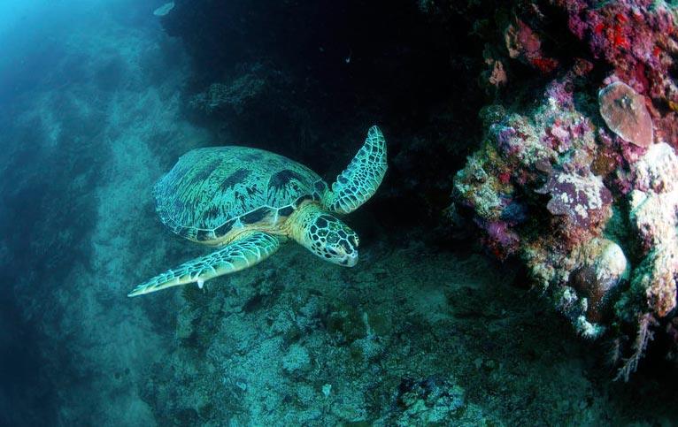 buceo en Malasia