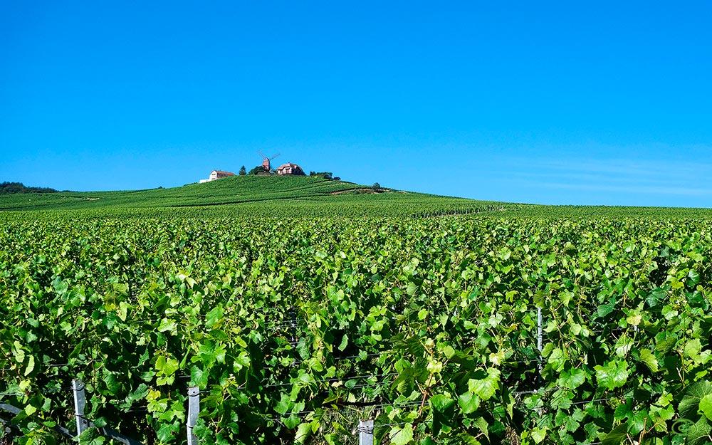 Ruta vinícola